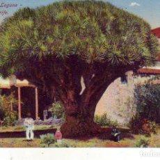Postales: TENERIFE - LA LAGUNA - DRAGO. Lote 130945572