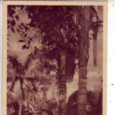 Postales: TENERIFE - JARDIN BOTANICO OROTAVA. Lote 130945920