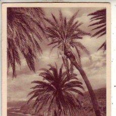 Postales: TENERIFE RAMBLA DE CASTRO. Lote 130946068