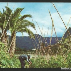Postales: VALLE DE AGAETE - TOMATEROS - GRAN CANARIA - P30005. Lote 132413354