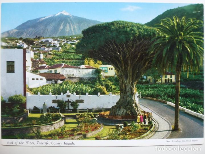 POSTAL. ICOD DE LOS VINOS. TENERIFE. ED. JOHN HINDE. NO ESCRITA. (Postales - España - Canarias Moderna (desde 1940))