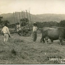 Postales: TENERIFE-LA LAGUNA- UNA HERA Y BUEYES-FOTOGRÁFICA- JG Nº 82- AÑO 1927-MUY RARA. Lote 134592382