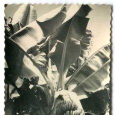 Postales: TARJETA POSTAL FOTOGRAFICA - LAS PALMAS DE GRAN CANARIA / PLATANERAS. Lote 142555138