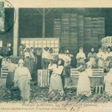 Postales: EMPAQUE DE BANANAS. LAS PALMAS. CIRCULADA EN 1903. ALZOLA MARTIN. RARA. Lote 146284686