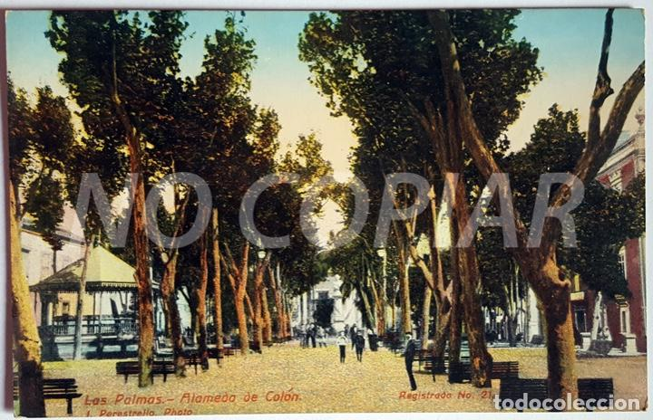 Postales: 7 POSTALES ANTIGUAS DE LAS PALMAS. EDITOR: J. PERESTRELLO, PHOTO. NUMERADAS. NUEVAS. SIN USO. - Foto 6 - 146293026