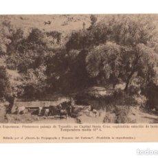 Postales: TENERIFE. LA ESPERANZA. PINTORESCO PAISAJE. EDITADO POR CENTRO DE PROPAGANDA Y FOMENTO DEL TURISMO.. Lote 173233847