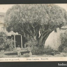 Postales: TENERIFE-DRAGO LAGUNA-REVERSO SIN DIVIDIR-POSTAL ANTIGUA-(57.140). Lote 151446794