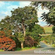 Postales: ESPAÑA & CIRCULADO,RECUERDO DE CANARIAS, PAISAJE, DONNEMARIE FRANCIA 1969 (2146). Lote 152384582