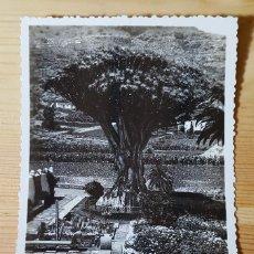 Postales: TENERIFE ICOD EL DRAGO ED. ARRIBAS Nº 60. Lote 153165394