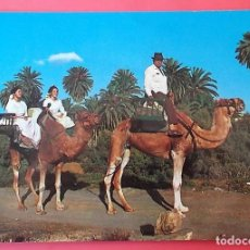 Postales: GRAN CANARIA. 118 TIPISMO. CAMELLOS MONTADOS. NUEVA. COLOR. Lote 153619868