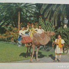 Postales: POSTAL DE LAS PALMAS DE GRAN CANARIA : DETALLE TIPICO . AÑOS 60 , CANARIO CON ROPA TIPICA Y CAMELLO. Lote 155394970