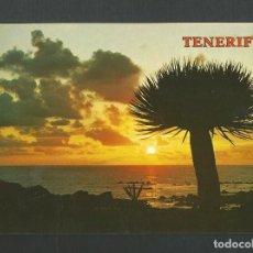 Postales: POSTAL SIN CIRCULAR - PLAYA DE LAS AMERICAS 5435 - TENERIFE - EDITA PAGSA. Lote 156604214