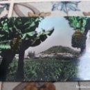Postales: ARUCAS . Lote 164557738