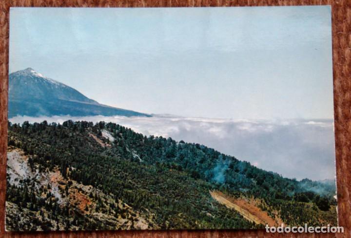 TENERIFE - MONTE DE LA ESPERANZA Y TEIDE (Postales - España - Canarias Moderna (desde 1940))