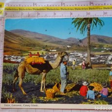 Postales: POSTAL DE LANZAROTE. AÑO 1977. VALLE DE YAIZA, RECOGIDA DE CEBOLLAS CAMPESINOS. 1539. Lote 171744958