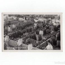 Postales: TENERIFE.(CANARIAS).- SINDICATO AGRICOLA DEL NORTE DE TENERIFE.OROTAVA.. Lote 172085343