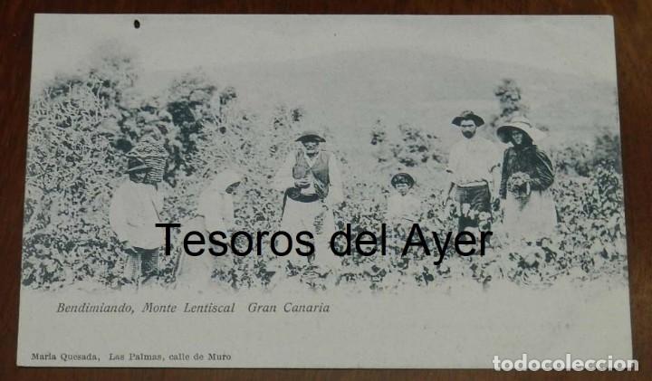 POSTAL DE GRAN CANARIA, BENDIMIANDO, MONTE LENTISCAL, ED. MARIA QUESADA, LAS PALMAS, NO CIRCULADA, S (Postales - España - Canarias Antigua (hasta 1939))