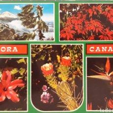 Postales: POSTAL N°6028 FLORA CANARIA TENERIFE. Lote 174977372