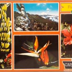 Postales: POSTAL N°6027 FLORA CANARIA TENERIFE. Lote 174977738