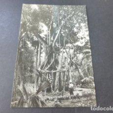 Postales: OROTAVA TENERIFE JARDIN TROPICAL ARBOL DE LA GOMA. Lote 178366790