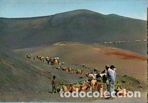 CANARIAS - LANZAROTE - Nº 5122 CARAVANA DE CAMELLOS EN LA MONTAÑA - AÑO 1972- SIN CIRCULAR (Postales - España - Canarias Moderna (desde 1940))