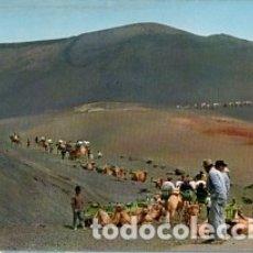 Postales: CANARIAS - LANZAROTE - Nº 5122 CARAVANA DE CAMELLOS EN LA MONTAÑA - AÑO 1972- SIN CIRCULAR. Lote 183077841