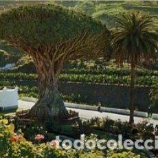 Postales: CANARIAS - TENERIFE - Nº 60 ICOD DE LOS VINOS DRAGO MILENARIO - AÑO 1974 - SIN CIRCULAR. Lote 183083725
