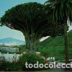 Postales: CANARIAS - TENERIFE - Nº 1013 ICOS DRAGO MILENARIO AL FONDO EL TEIDE - AÑO 1978 - SIN CIRCULAR. Lote 183084257