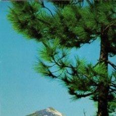 Postales: CANARIAS - TENERIFE - TEIDE - PINOS CANARIOS Y TEIDE AL FONDO - AÑO 1978 - SIN CIRCULAR. Lote 183086855