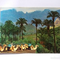 Postales: TARJETA POSTAL - SANTA LUCIA - LAS PALMAS DE GRAN CANARIA - BONITO PANORAMA - CAMELLOS 641. Lote 183362295