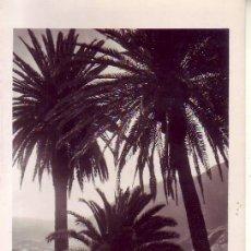 Postales: TENERIFE FOTO BAENA PLATANERAS. Lote 183462368