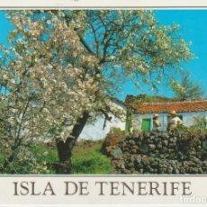 Postales: (2593) TENERIFE. SANTIAGO. RINCON TIPICO. Lote 183503712