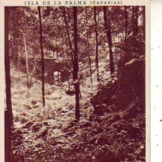 Cartes Postales: TENERIFE LA PALMA CUBO DE LA GALGA. Lote 183632837