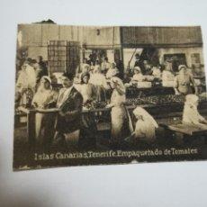 Postales: POSTAL ORIGINAL. 6.5 X 4.6CM. DÉCADA 30. Nº 1441. TENERIFE. EMPAQUETADO DE TOMATES. Lote 183952007