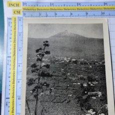 Postais: FOTO POSTAL DE TENERIFE. AÑOS 30 50. LA OROTAVA EL VALLE. 2277. Lote 184310816