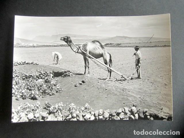 POSTAL LANZAROTE. ESCENAS CAMPESTRES. ED. ARRIBAS. (Postales - España - Canarias Moderna (desde 1940))