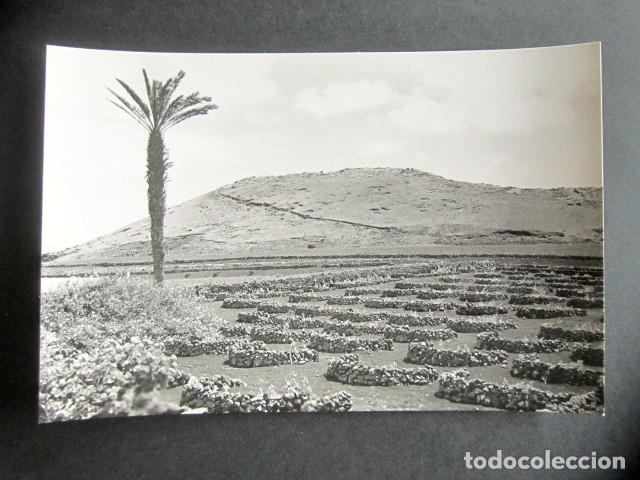 POSTAL LANZAROTE. VIÑEDOS EN TERRENOS VOLCÁNICOS. ED. ARRIBAS. (Postales - España - Canarias Moderna (desde 1940))