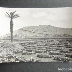 Postales: POSTAL LANZAROTE. VIÑEDOS EN TERRENOS VOLCÁNICOS. ED. ARRIBAS. . Lote 186418803
