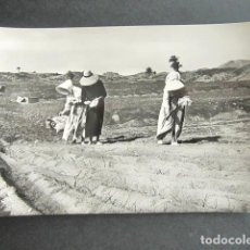 Postales: POSTAL LANZAROTE. LABORES DE SIEMBRA. FOTO GABRIEL FERNANDEZ. . Lote 186419043