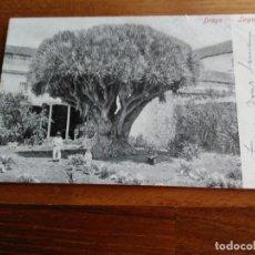 Postales: TARJETA POSTAL TENERIFE - DRAGO - LA LAGUNA CIRCULADA. Lote 189439772