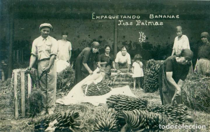 LAS PALMAS. EMPAQUETANDO BANANAS. HACIA 1920. FOTOGRÁFICA. (Postales - España - Canarias Antigua (hasta 1939))