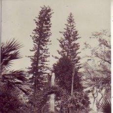 Postales: TENERIFE PUERTO DE LA CRUZ-JARDIN BOTANICO JG 77. Lote 193984156