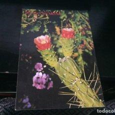 Postales: POSTAL DE FLORA CANARIA - BONITAS VISTAS - LA DE LA FOTO VER TODAS MIS POSTALES. Lote 194012006