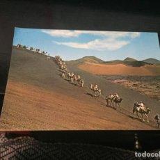 Postales: POSTAL DE LANZAROTE CARAVANA DE CAMELLOS - BONITAS VISTAS - LA DE LA FOTO VER TODAS MIS POSTALES. Lote 194012052