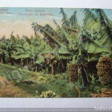 Postales: GRAN CANARIA. PLANTACIÓN DE BANANOS. LAS PALMAS. J. PERESTRELLO PHOTO. Lote 195329366