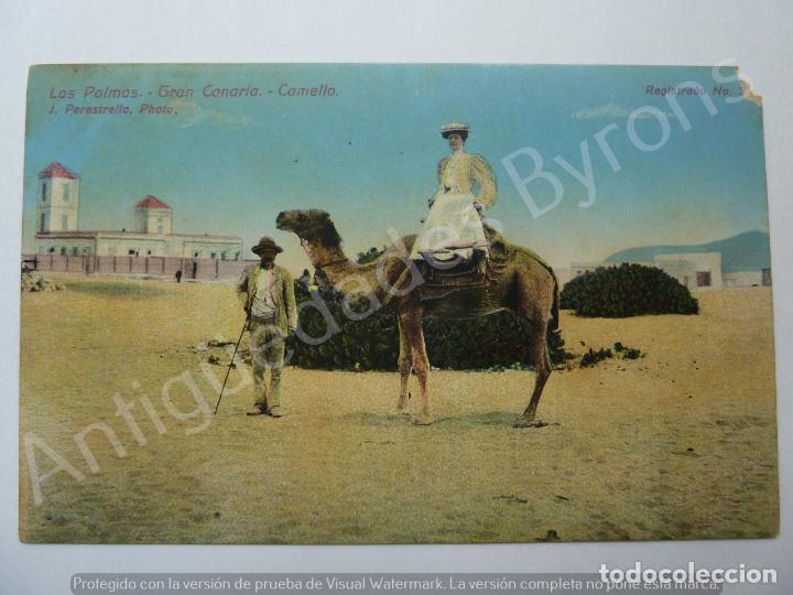 LAS PALMAS. GRAN CANARIA. CAMELLO. LAS PALMAS. J. PERESTRELLO PHOTO (Postales - España - Canarias Antigua (hasta 1939))