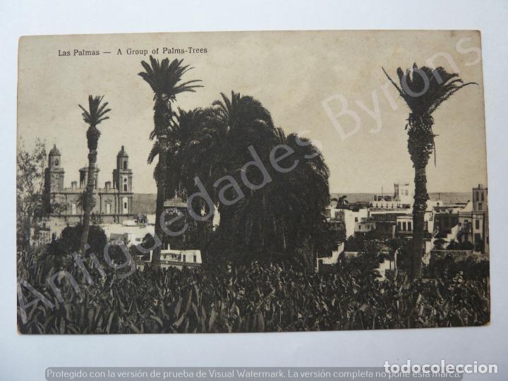 LAS PALMAS. A GROUP OF PALMS TREES. BAZAR ALEMÁN (Postales - España - Canarias Antigua (hasta 1939))