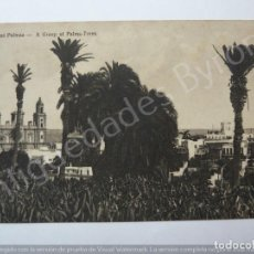 Postales: LAS PALMAS. A GROUP OF PALMS TREES. BAZAR ALEMÁN. Lote 195330591