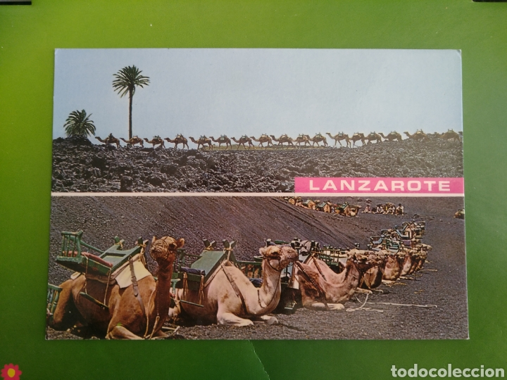 POSTAL LANZAROTE ( ISLA CANARIA ) 20176 (Postales - España - Canarias Moderna (desde 1940))