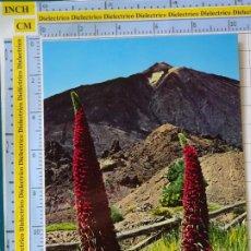 Postais: POSTAL DE TENERIFE. AÑO 1972. LAS CAÑADAS, FLOR DE TAJINASTE Y TEIDE. 48 GLOBAL TRADERS. 294. Lote 200303568